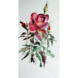 Roses of summer II