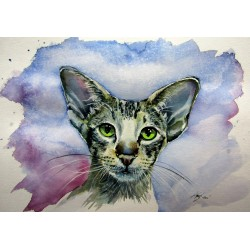 Siamese oriental cat