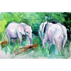 Elephants meeting