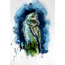 Owl watching at night