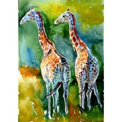 Giraffes on the field