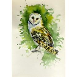 Majestic barn owl