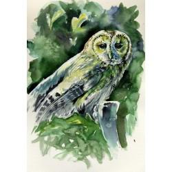 Majestic owl