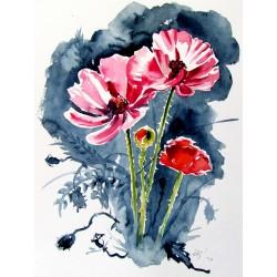 Some poppy flowers