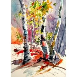 Autumn forest impression