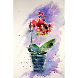 Still life with orchidea